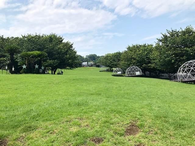 伊豆ぐらんぱる公園にある芝生広場