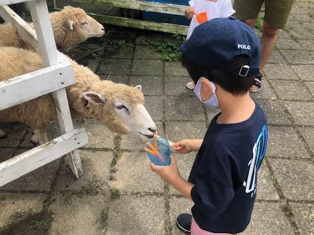 箱根園のどうぶつらんど抱っこして!ZOO!で羊にエサをあげる子ども