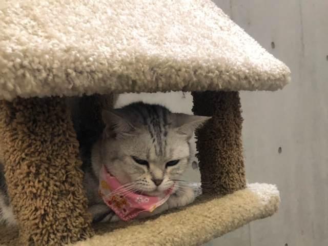 箱根園「どうぶつランドだっこして!ZOO!」にいる猫