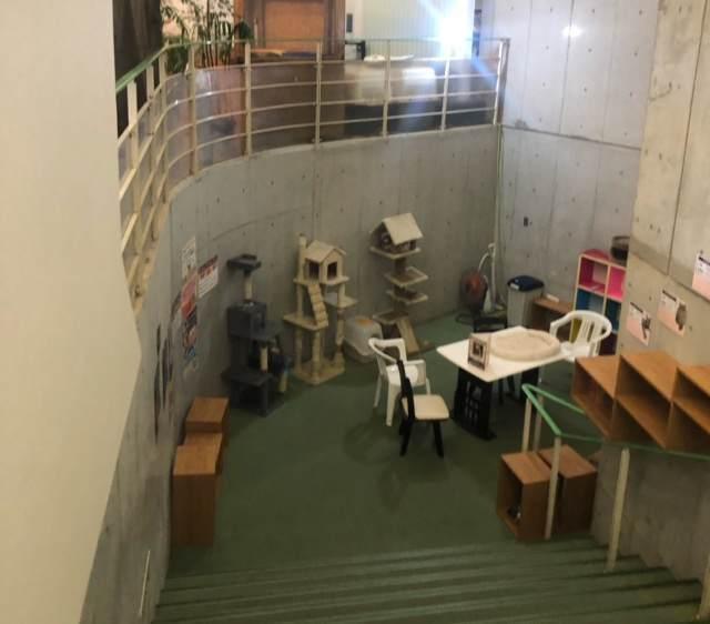 箱根園「どうぶつランドだっこして!ZOO!」の猫がいるエリアにある階段
