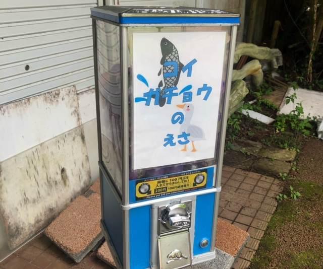 箱根園水族館の鯉とガチョウのエサ