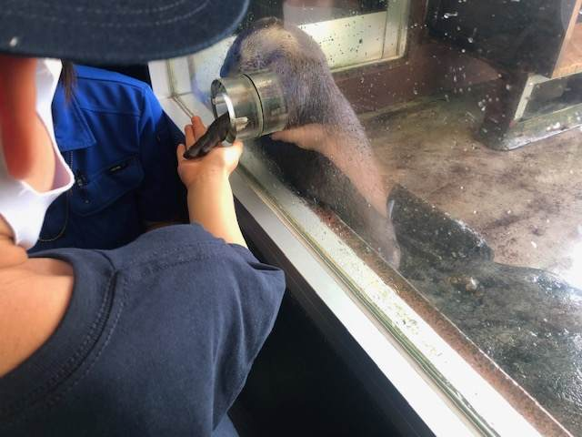 箱根園水族館でカワウソと握手をしている子供