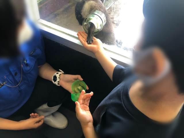 箱根園水族館のカワウソにエサをあげる子ども