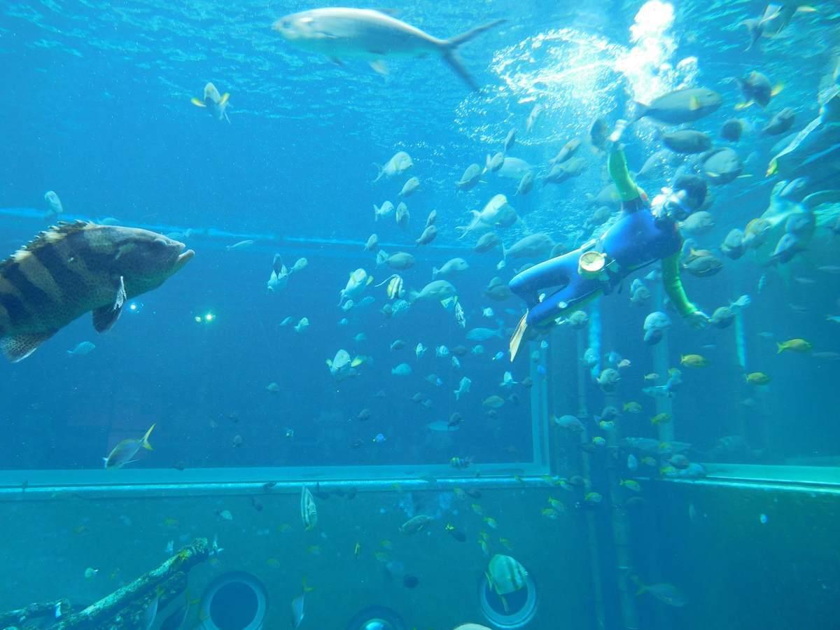 箱根園水族館の海中ショー