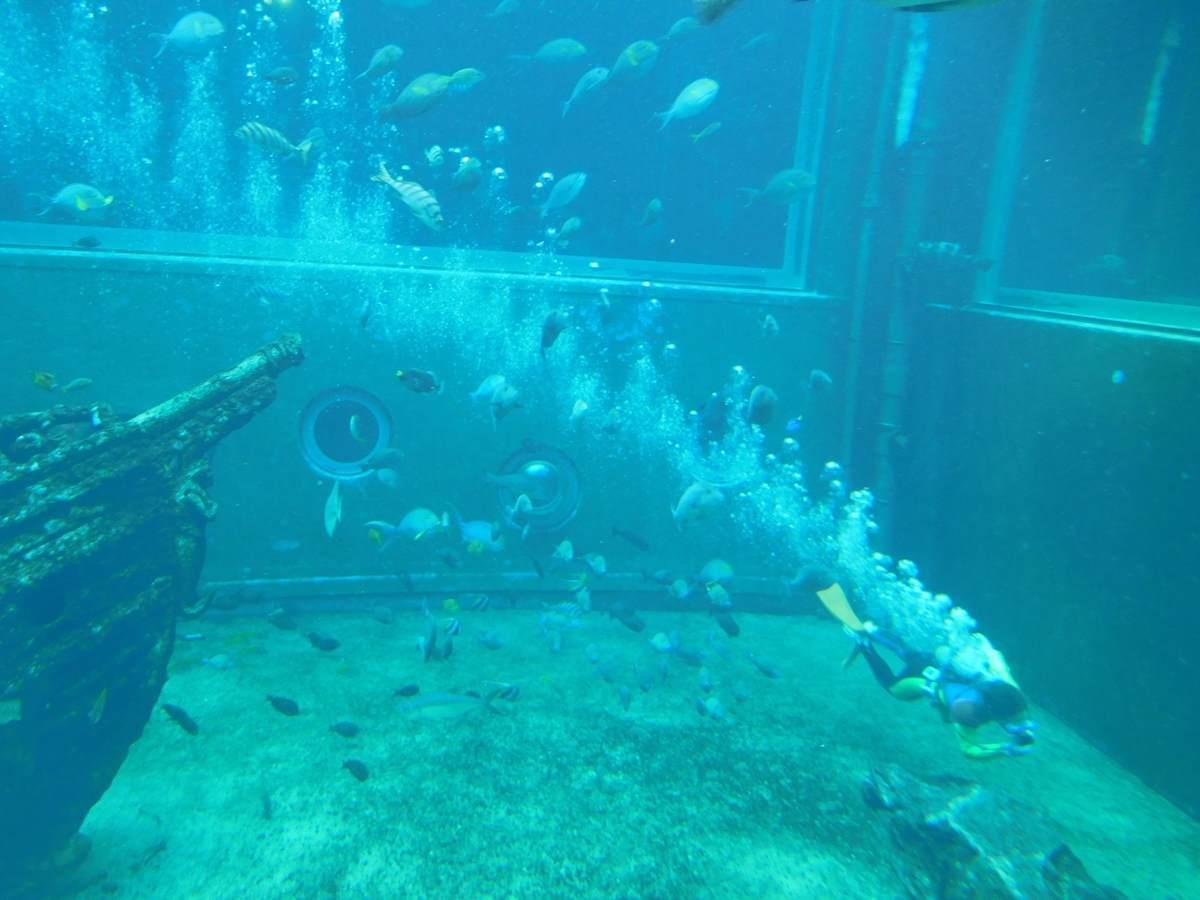 箱根園水族館でショーをするダイバー