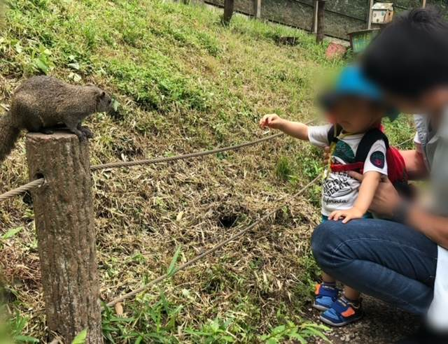 町田リス園でリスを見つめる子ども