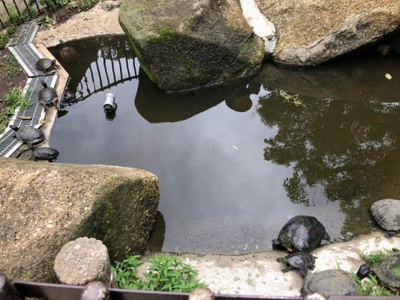 町田リス園にいる亀