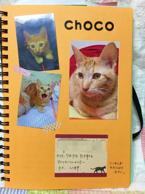 猫用のノート
