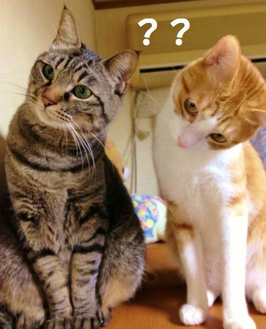 猫の不思議・何故?