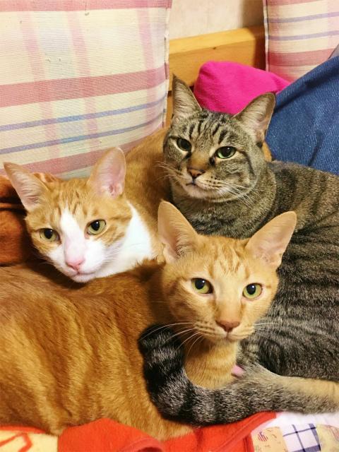 寄り添っている3匹の猫