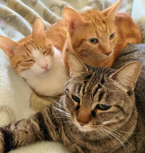 3匹の猫と暮らす