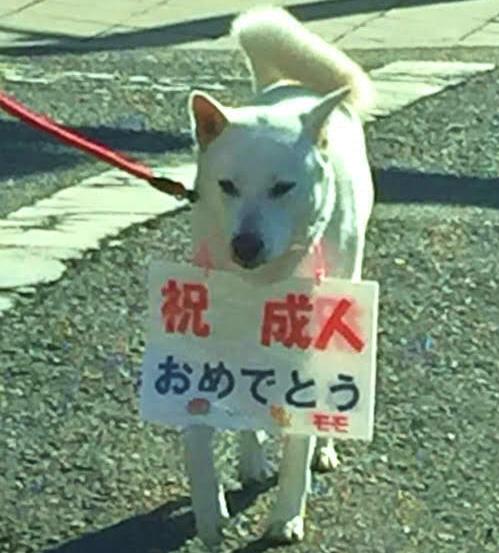 「成人おめでとう」の看板犬