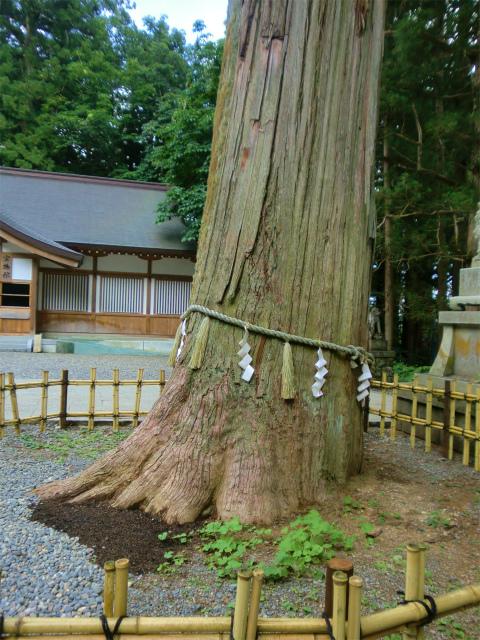 戸隠神社 中社の御神木