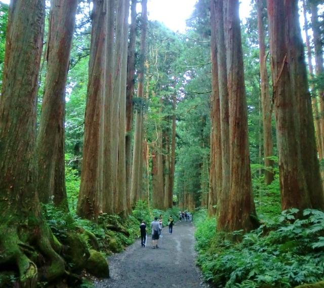 戸隠神社 奥社参道の杉並木