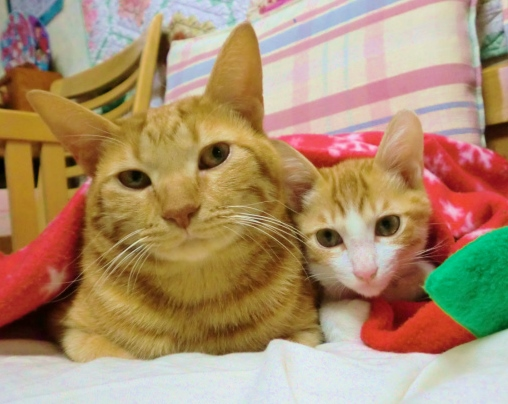 猫のチョコとソラ