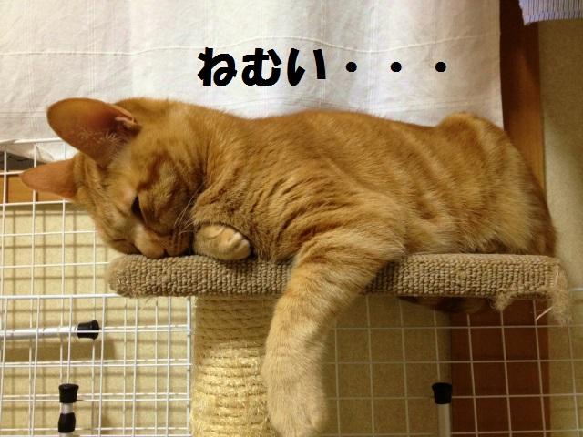 午後の睡魔に勝つ方法