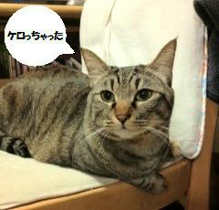 猫の毛玉ケア