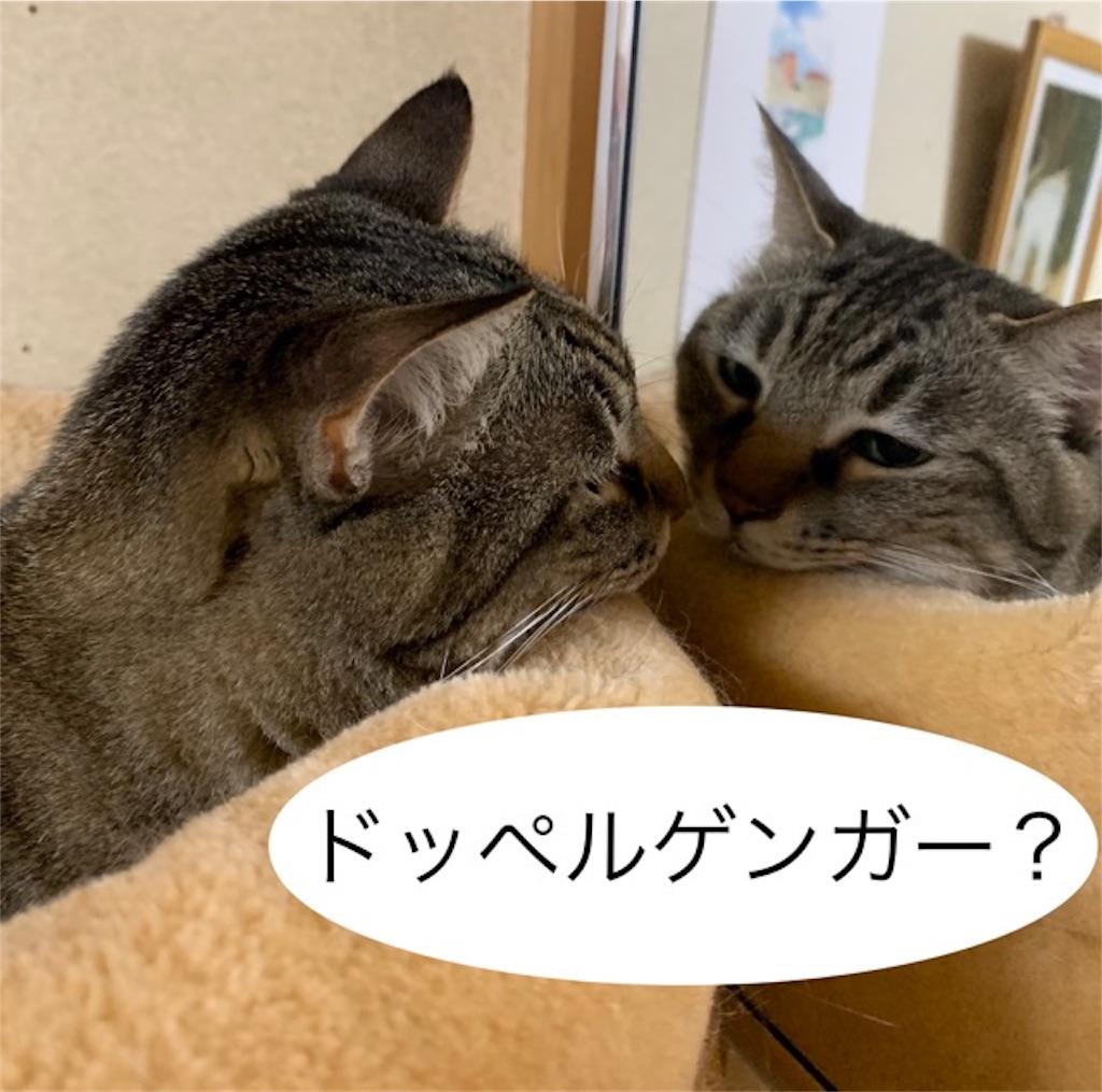 f:id:mitsu5858:20190705213813j:image