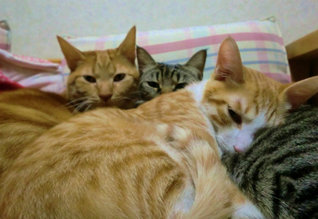 猫との暮らし