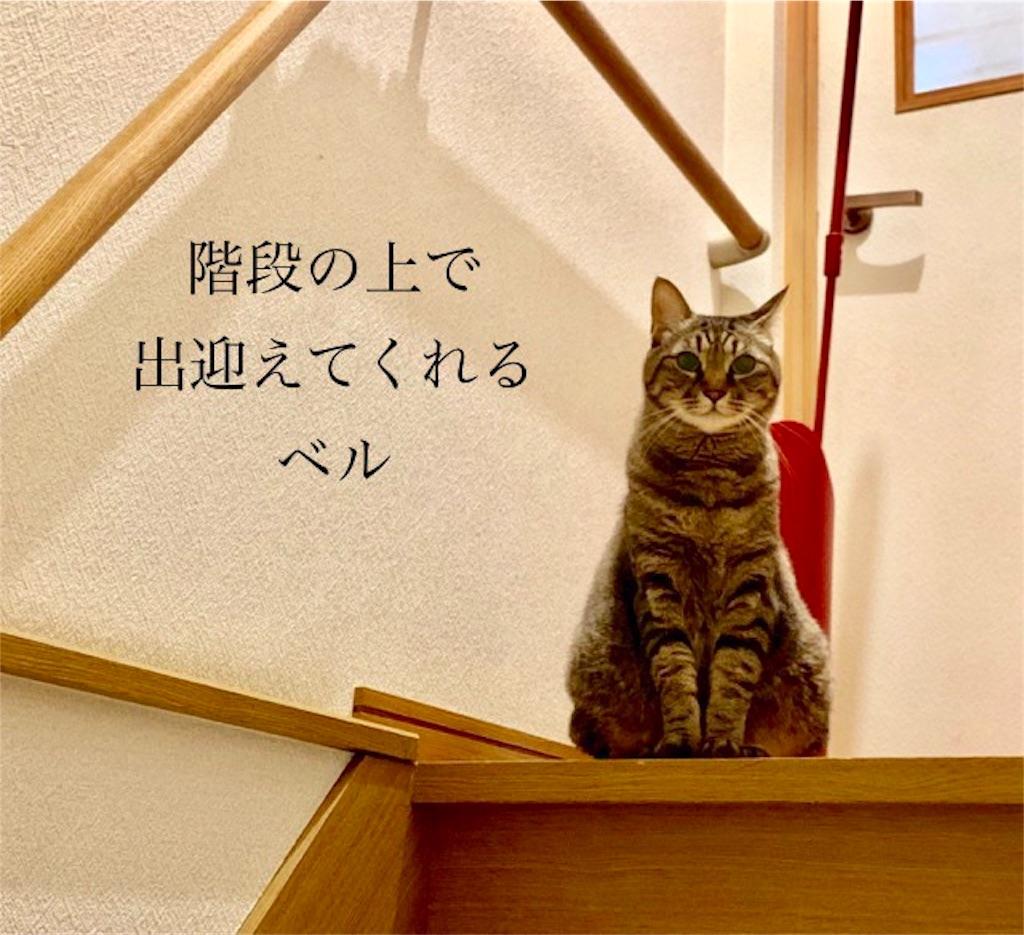 f:id:mitsu5858:20190801091758j:image