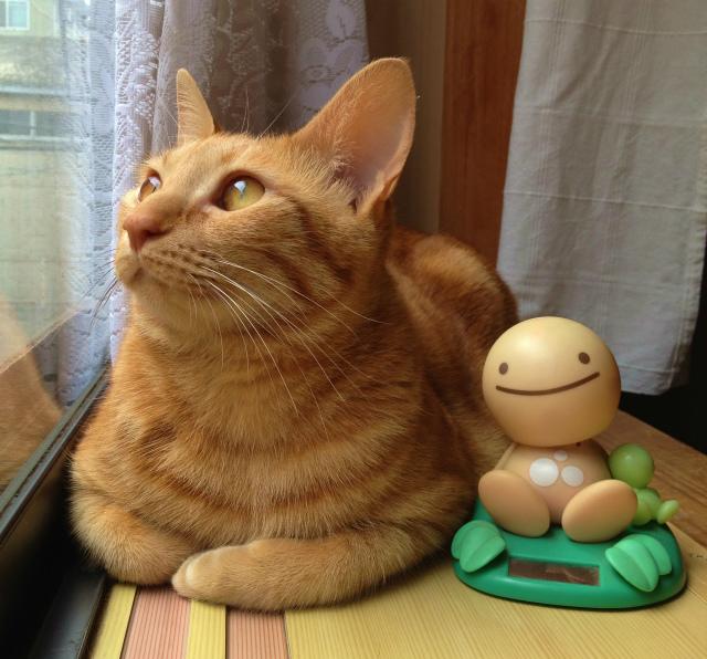 猫が窓の外を見る