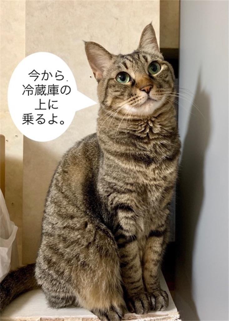 f:id:mitsu5858:20190811215234j:image