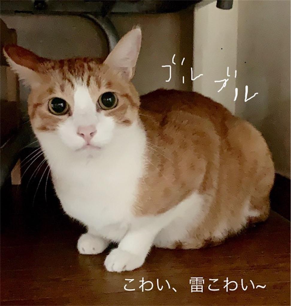 f:id:mitsu5858:20190906095750j:image