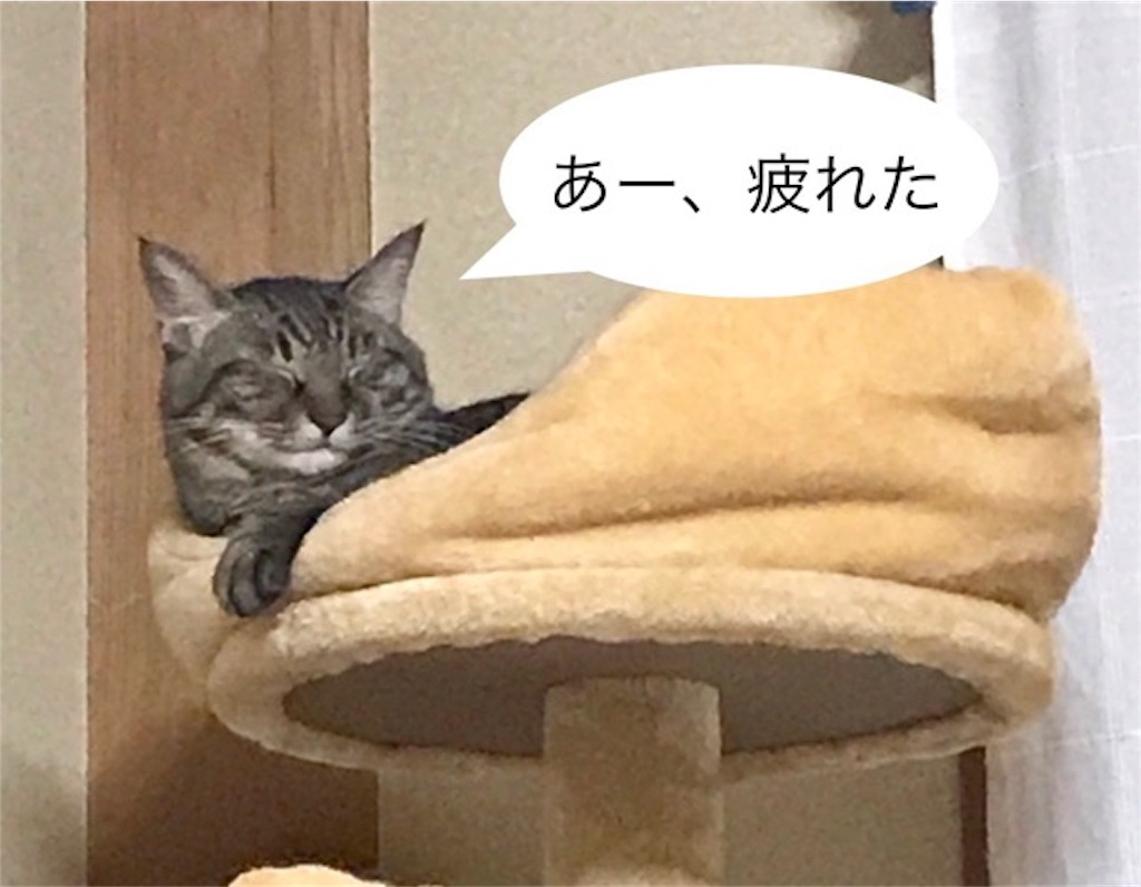 f:id:mitsu5858:20190906215944j:image