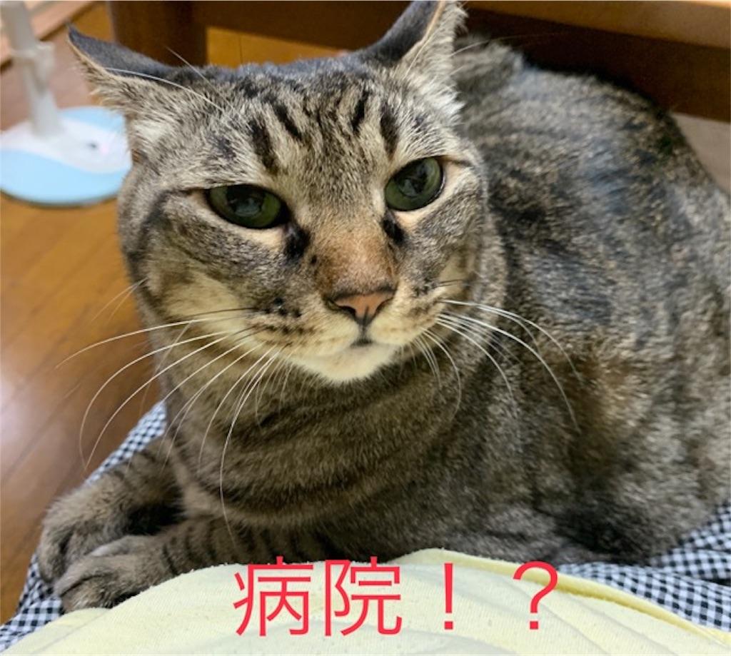 f:id:mitsu5858:20190907104840j:image