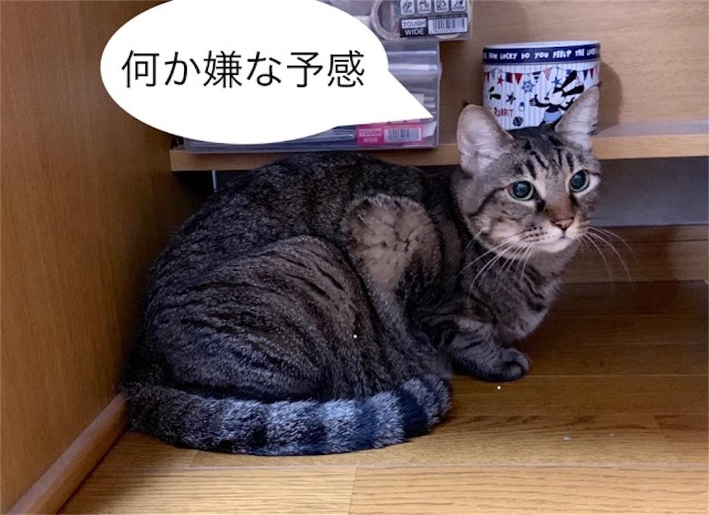f:id:mitsu5858:20190907104909j:image