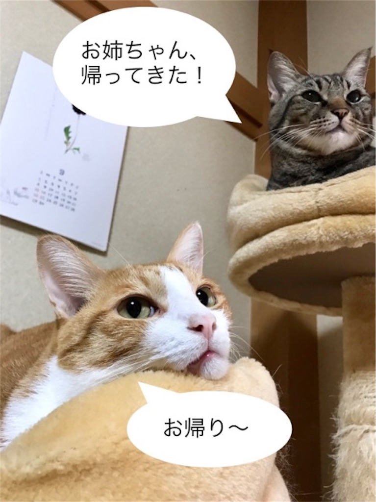 f:id:mitsu5858:20190922095919j:image