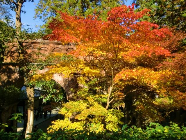 京都 紅葉 水路閣