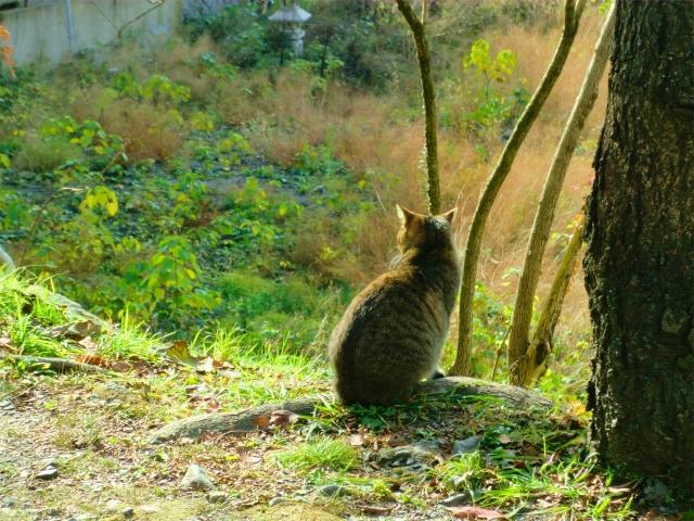 京都 哲学の道の猫