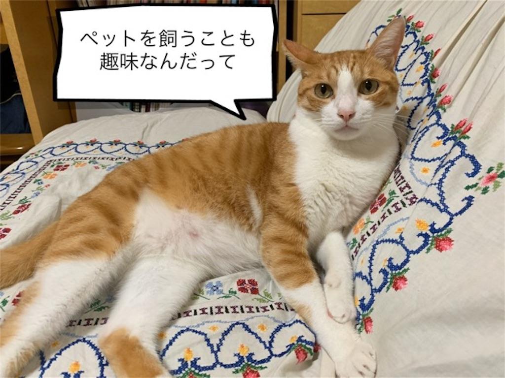 f:id:mitsu5858:20191029132051j:image