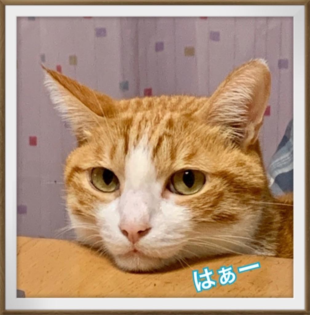 f:id:mitsu5858:20191101080425j:image