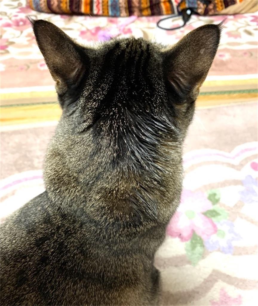 猫のえづく咳