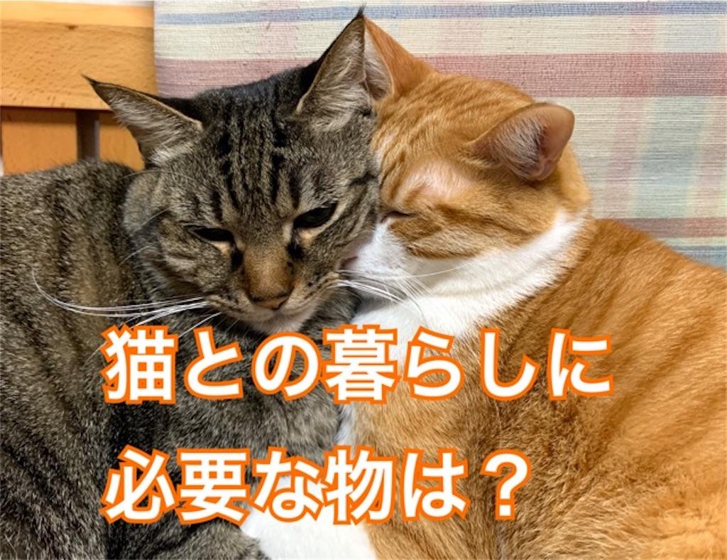 f:id:mitsu5858:20200127154155j:image