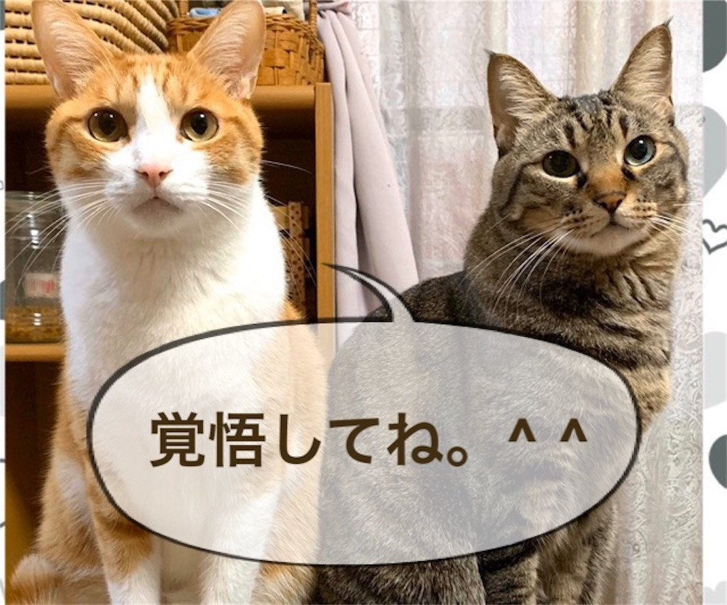 f:id:mitsu5858:20200128114257j:image