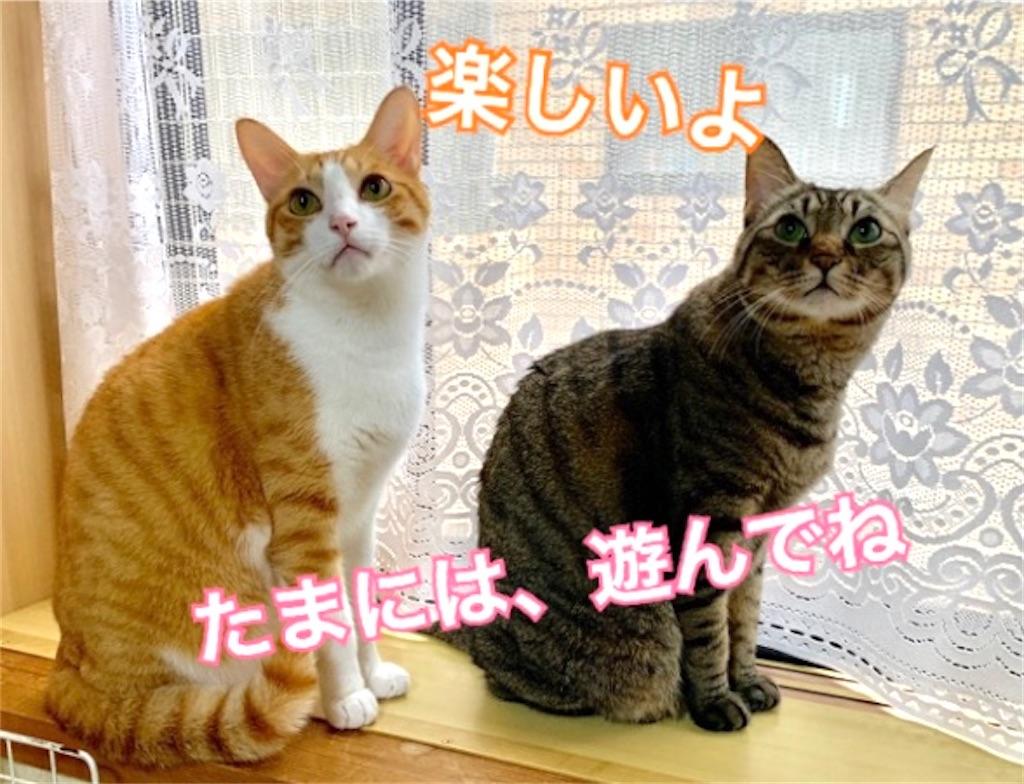 f:id:mitsu5858:20200128114308j:image