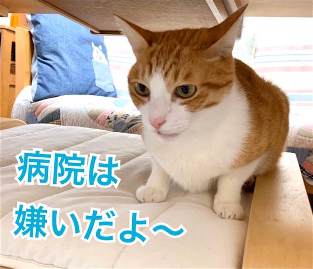f:id:mitsu5858:20200128115036j:image
