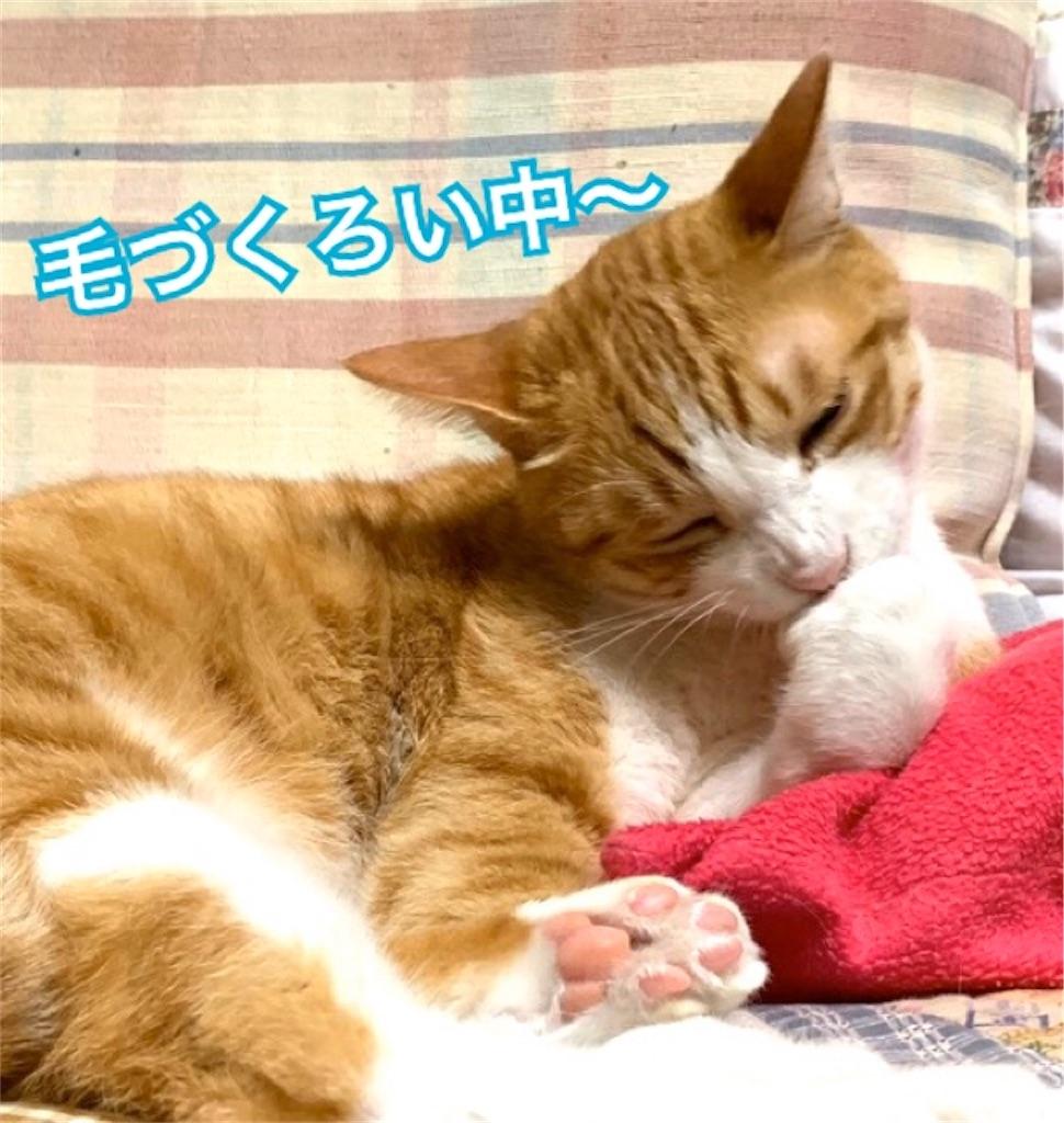 f:id:mitsu5858:20200201114757j:image