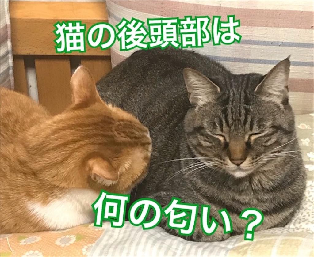 f:id:mitsu5858:20200201120449j:image