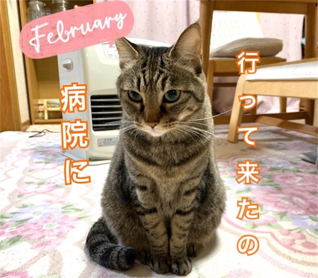 f:id:mitsu5858:20200215123655j:image
