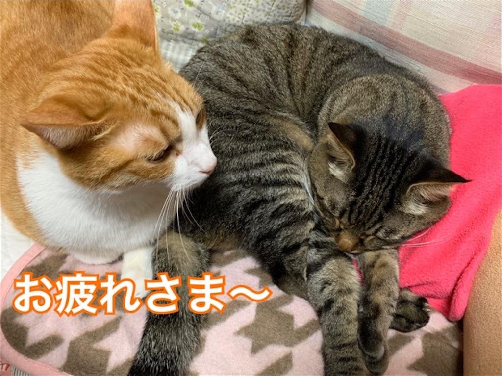 f:id:mitsu5858:20200215123704j:image