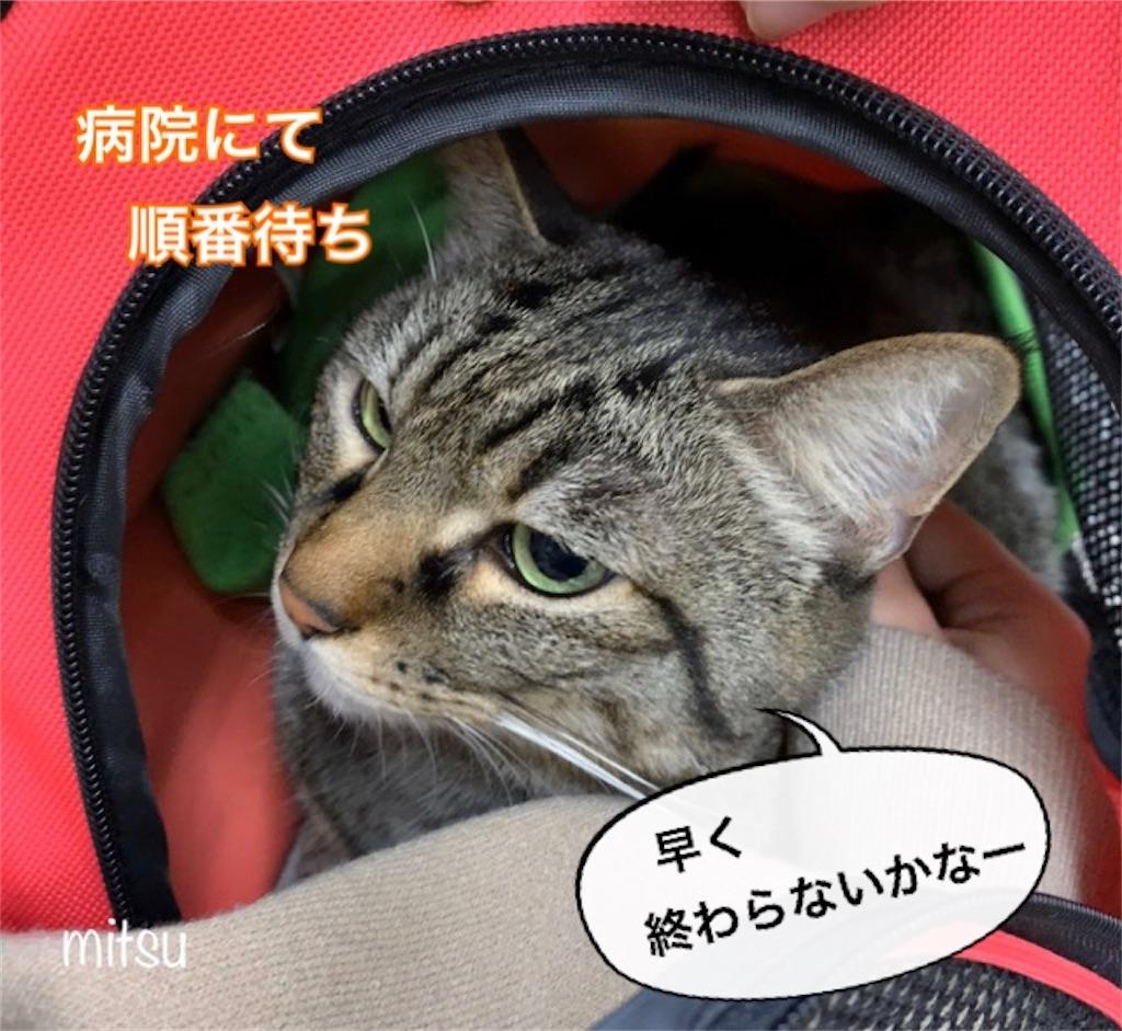 f:id:mitsu5858:20200215144219j:image