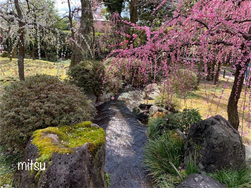 しだれ梅が見事な城南宮の神苑