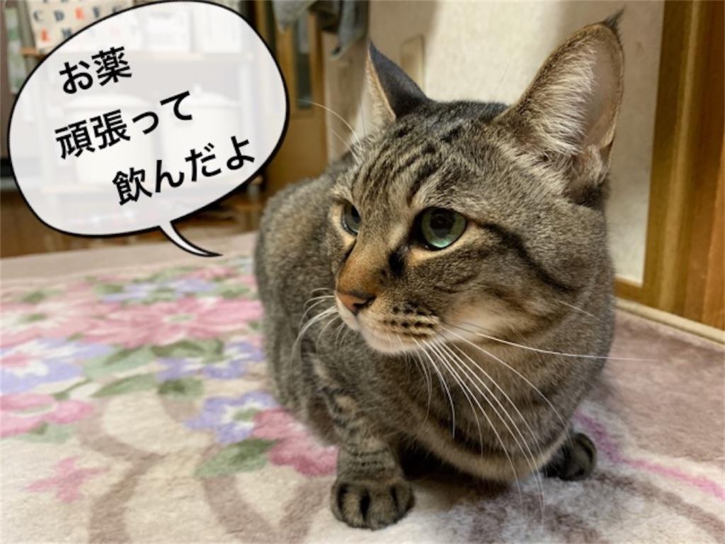 f:id:mitsu5858:20200222133205j:image