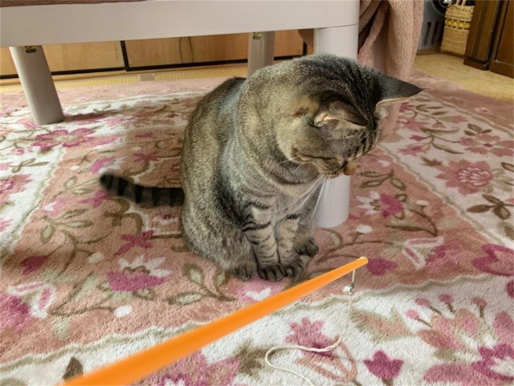 猫はおもちゃをすぐ壊す!
