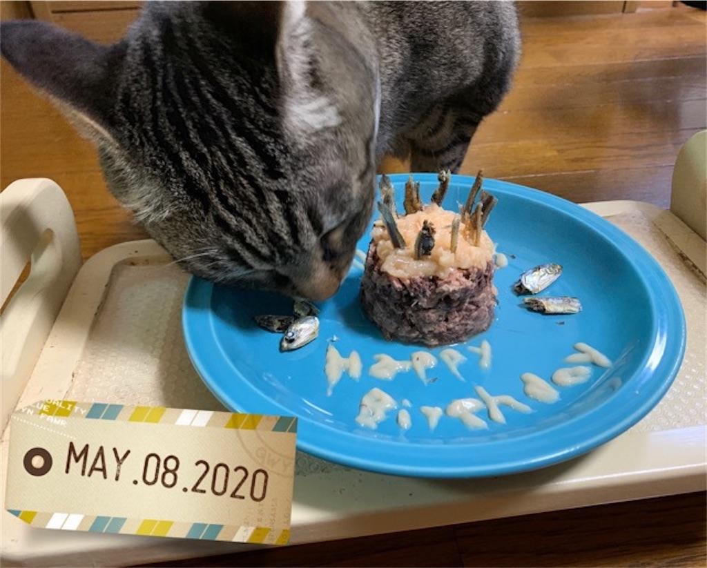 猫缶ケーキで10才の誕生日のお祝いプレート
