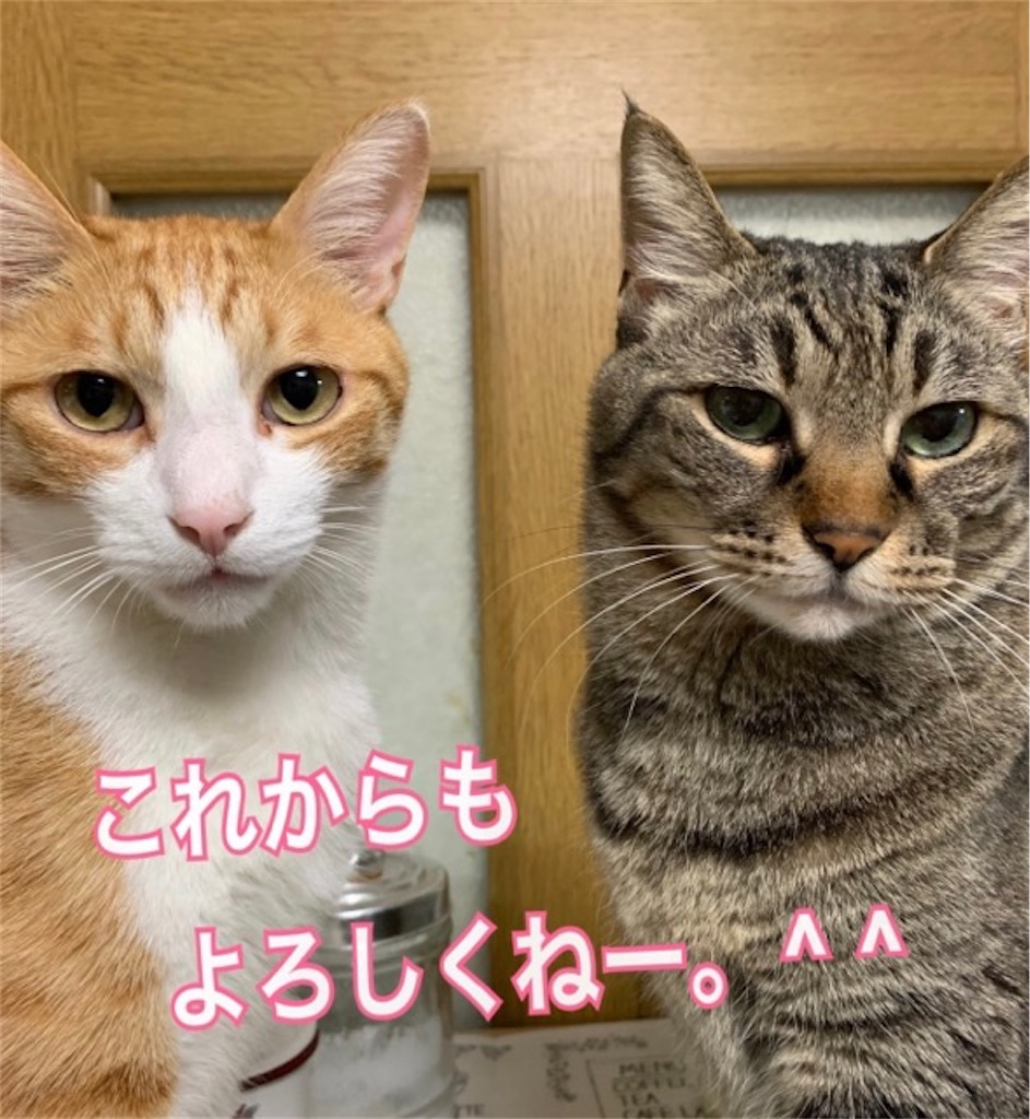f:id:mitsu5858:20200623094426j:plain